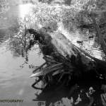"""Tree in the river"" by BGTPhotography"