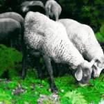 """sheep"" by momento"