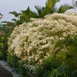 """White flowers"" by prateek"