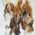 """Bracco Italiano"" by BarbBarcikKeith"