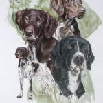 """German Short-haired Pointer"" by BarbBarcikKeith"