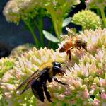 """Honey and Bumble Bee"" by bavosiphotoart"