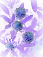 Purple Flower Negative