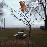 """tree and bag"" by MKreidler"