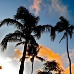 """""""Aloha"""" by drmoto"""