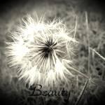 """Beauty"" by raven1967"