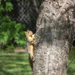 """""""Squirrel Climbing"""" by meltonphotography"""