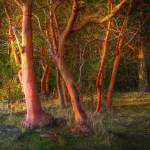"""""""Trees Dance In December"""" by LydiaGaebeBishop"""