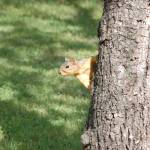 """""""Peaking Squirrel"""" by meltonphotography"""