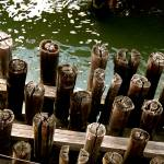 """Pilings in Green water"" by blacksheepink"