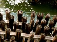 Pilings in Green water