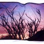 """Ocotillo at Sunset"" by JoanneNetland"