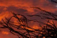 Phoenix Sunset with Mesquite Tree