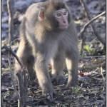 """""""Monkey"""" by fejesb"""