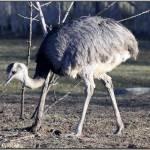 """""""Emu"""" by fejesb"""