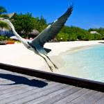"""""""A bird taking off"""" by unclassified"""