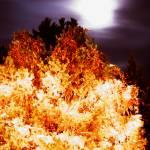 """""""Bush Fire"""" by kbob132"""