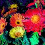 """""""Blooming Color"""" by ChrisInside"""