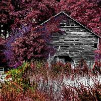 Grandpa's Barn Art Prints & Posters by Chris Overcash