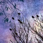"""""""Birds of a Feather"""" by angelandspot"""