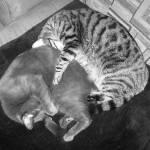 """Sleeping Cats"" by JohnEdwardThomasPhoto"