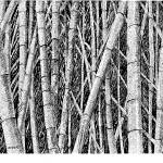 """bamboo forest"" by BRHedrickGallery"