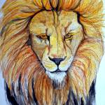 """""""Lion"""" by ChrisCrowley"""