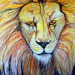 """Lion Crop 1"" by ChrisCrowley"