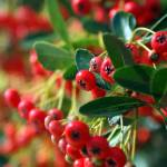 """""""Red Berries"""" by thewaltonsare"""