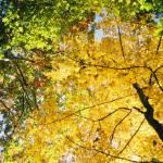 """Autumn Arriving"" by celiac"