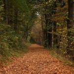 """""""Autumnal path"""" by 23gxg"""