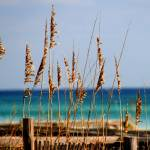 """sea oats"" by through_my_eyes"