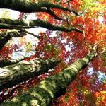 """""""Autumn"""