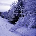 """""""A Blue Winter"""