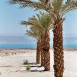 """qumran palms"" by loramitchell"