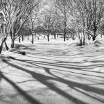"""Even Shadows Like to Play in the Snow"" by ZeipekisPhotography"