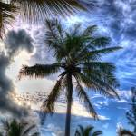 """Dark Palms"" by johnfrench"