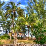 """Three Palms"" by johnfrench"