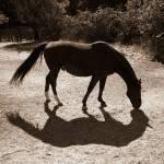 """Shadows of a horse"" by Hotash"