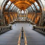 """London Natural History Museum"" by sergioamiti"