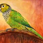 """Parrot"" by dianedaversa"