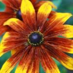 """""""Flower"""" by Davidmartinphotos"""