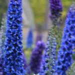 """""""Flowers in the Garden"""" by Davidmartinphotos"""