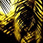 """Florida Calling"" by jansart"