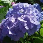 """""""Purple Flowers"""" by KatheenPrice"""