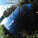 """""""Dark Pond"""" by absolutleiann"""