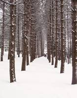 WinterForest