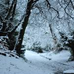 """Snowy Pathway"" by Craigo"