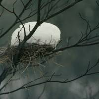 Bird's Nest Snow Art Prints & Posters by Michael Hamments