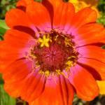 """My lovely flower"" by adiener"